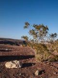 Горы, сухое дерево и ландшафт пустыни Стоковое Изображение RF
