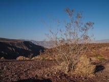 Горы, сухое дерево и ландшафт пустыни Стоковое Изображение