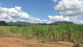 Горы Таиланда езды поезда, сельская местность сток-видео