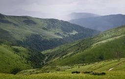 горы украинские Стоковая Фотография