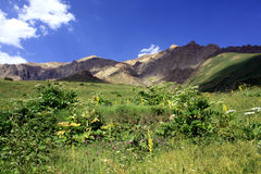 Горы Alborz стоковые фотографии rf