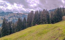 горы alps швейцарские Стоковые Изображения RF