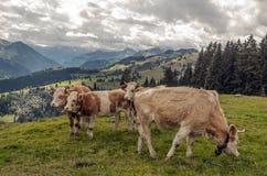 горы alps швейцарские Стоковая Фотография