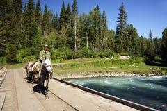 ГОРЫ ALTAI, РОССИЯ - 14-ОЕ ИЮЛЯ 2016: Местные люди используя лошадей для транспорта на горе Belukha Стоковые Фотографии RF