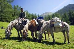 ГОРЫ ALTAI, РОССИЯ - 14-ОЕ ИЮЛЯ 2016: Местные люди используя лошадей для транспорта на горе Belukha Стоковое фото RF