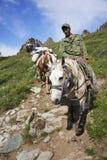 ГОРЫ ALTAI, РОССИЯ - 14-ОЕ ИЮЛЯ 2016: Местные люди используя лошадей для транспорта на горе Belukha Стоковое Изображение