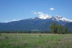 Горы Bitterroot около Гамильтона, Монтаны стоковые изображения