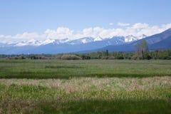 Горы Bitterroot около Гамильтона, Монтаны стоковая фотография