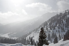 горы colorado стоковая фотография