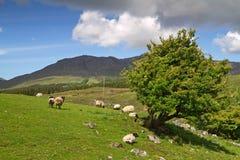 горы connemara Стоковая Фотография