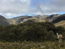 Горы El Cajas Стоковое Изображение RF