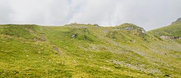 Горы Fagaras, Карпаты с зеленой травой и овцами, Tran Стоковые Изображения RF