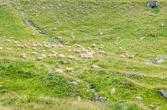Горы Fagaras, Карпаты с зеленой травой и овцами, Tran Стоковая Фотография