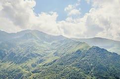 Горы Fagaras, Карпаты с зеленой травой и сосновыми лесами Стоковые Фотографии RF