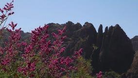 горы gran canaria сток-видео