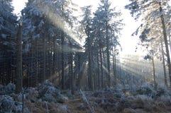 Горы Jeseniky стоковое фото