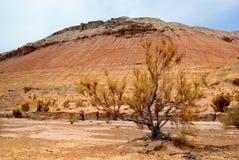 горы kazakhstan пустыни стоковое фото rf