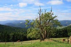 Горы Krkonose Стоковое Изображение