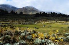 Горы MucubajÃ, MucuchÃes, Лос Анд, Венесуэлы Стоковые Изображения