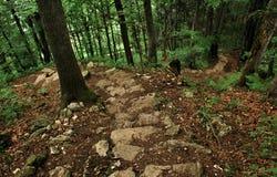 Горы Pieniny стоковая фотография rf