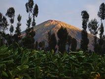 Горы Sindoro и плантации табака на наклонах Стоковые Изображения