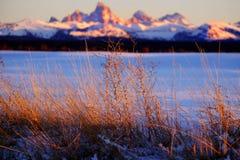 Горы Tetons Teton захода солнца засорителей дикой травы в предпосылке Bea стоковые фотографии rf