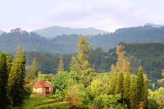 Горы Usambara стоковое изображение rf