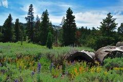 Горы Warner, Modoc County, Калифорния Стоковая Фотография RF