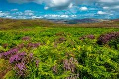Горы Wicklow около Дублина в Ирландии Стоковое Изображение RF