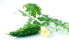Горькая тыква с листьями на белой предпосылке стоковые фото