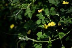 горькfNs дыня цветка Стоковая Фотография