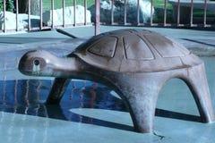 Горячая черепаха Стоковое Фото