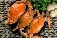 Горячие испаренные синие краби с имбирем Крабы Мэриленда Сваренный и подготавливайте для еды стоковая фотография rf