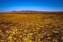 Горячие источники в Dallol, пустыне Danakil, Эфиопии Стоковое Фото