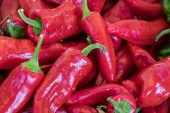 Горячие перцы красных чилей продали на местном рынке города Провансаль стоковая фотография