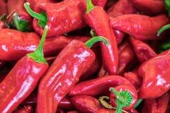 Горячие перцы красных чилей продали на местном рынке города Провансаль стоковые фотографии rf