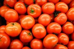 горячие томаты дома Стоковое фото RF