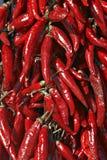 горячий венгерский красный цвет перца Стоковое Изображение RF