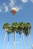 Горячий воздушный шар над пальмами Стоковые Фотографии RF
