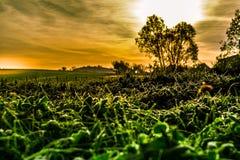 Горячий восход солнца Стоковое Изображение RF