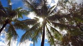Горячий и ослеплять солнце через прибрежные пальмы стоковые изображения