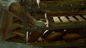 Горячий хлеб от транспортера сток-видео