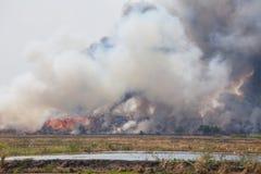 Горящая куча отброса дыма стоковые изображения