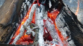 Горящая древесина осенью Стоковое Фото