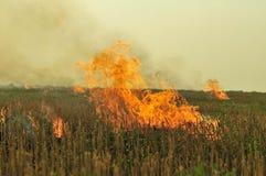 горящая стерня Стоковые Фотографии RF