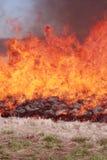 горящая трава поля Стоковые Изображения RF