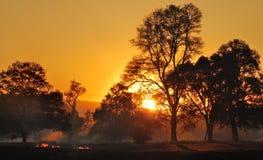 горящая трава Стоковое Изображение