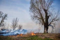 горящая трава Стоковое Фото