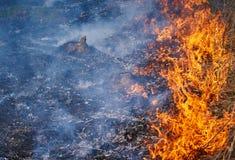 горящая трава Стоковые Фотографии RF