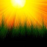 Горящее красное солнце с травой Стоковые Изображения